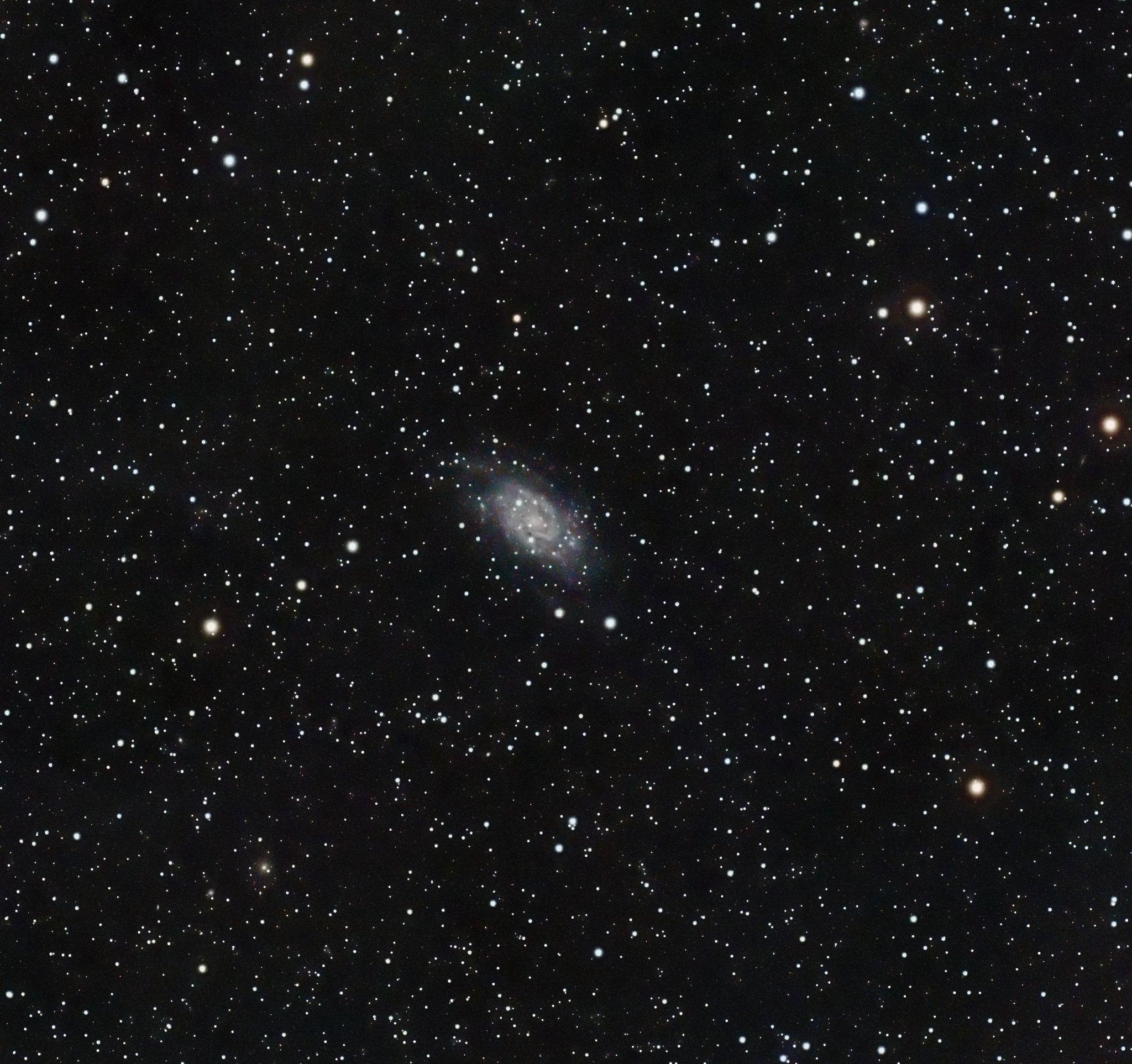 C7 or NGC2403 Pat Devine
